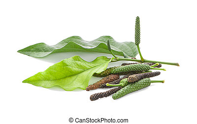 Long pepper isolated on the white background