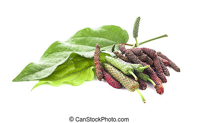 Long pepper or Piper longum isolated on white background