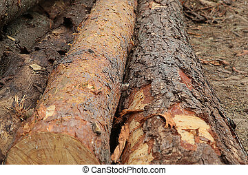 Long pine trunk bark brown lying on the ground.