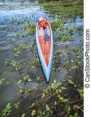 Tail view of a long and narrow racing stand up paddleboard on overgrown lake in summer - Boyd Lake State Park popular recreation and boating spot in northern Colorado.