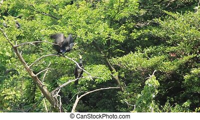long, rivière, cormoran, arbres