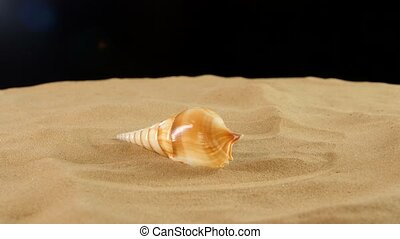 Long sea shell with sand on black, rotation