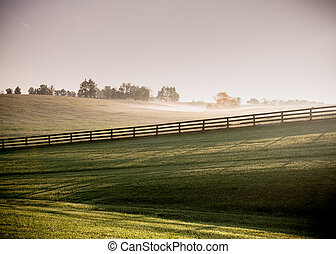 Long Shadows of Horse Fences in the Fog
