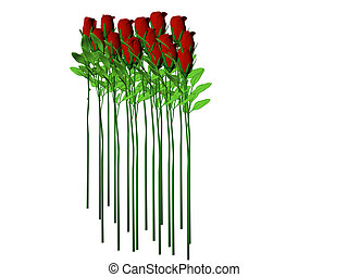 Long Stem Roses - Isolated long stem roses