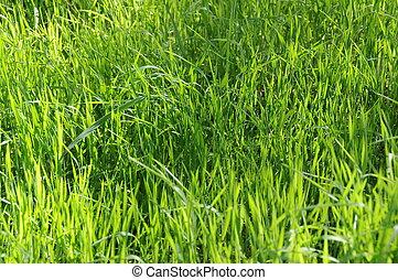 Long Uncut Grass