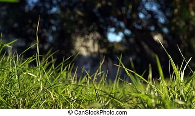 Long uncut green grass blowing in the wind runner passing...