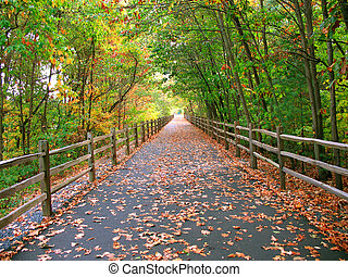 A long, wooded trail that goes through the woods in Connecticut - this one is used by cyclists, skaters, and even walkers.