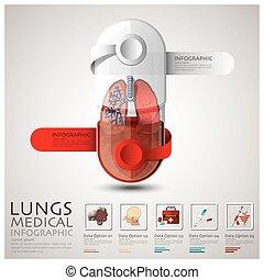 longen, medisch, capsule, infographic, gezondheid, pil