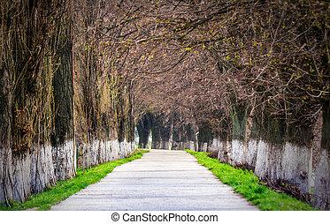 longest european linden alley in springtime - Longest linden...