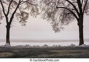 longest european linden alley in winter - Longest linden...