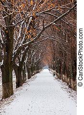 longest european linden alley in winter. walking path...