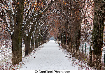 longest european linden alley in winter. walking path...