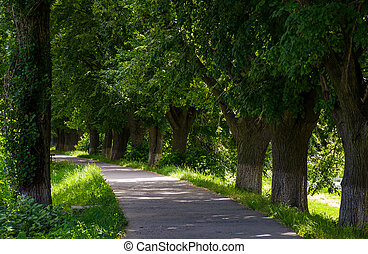 longest european linden alley - longest linden alley in...