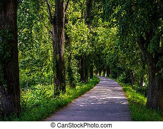 longest european linden alley - longest linden alley in...
