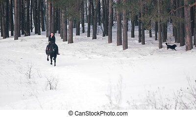 Longhaired female rider wild and fast riding black horse...