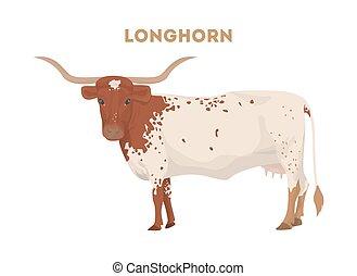 longhorn, odizolowany, cow.