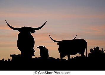 Longhorn Overlook - Longhorn cattle on the range of the Star...