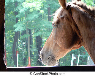 Horse Longing to Ride