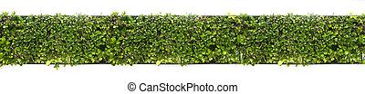 longitudinal green leaves plant on vertical wall