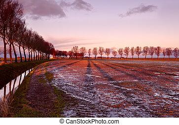 longo, árvore, sombras, em, amanhecer