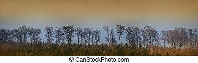 longo, árvores, fila