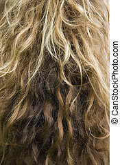 longo, ondulado, hair.