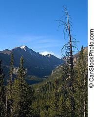 Longs Peak and Tree