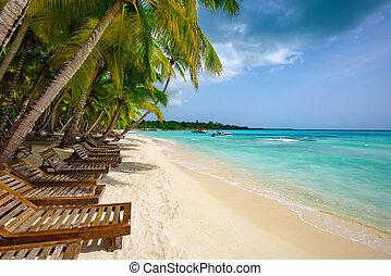 longue, palma, chaise, praia