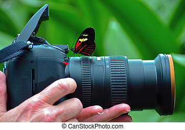 Longwing butterfly on camera lens - Curious longwing ...