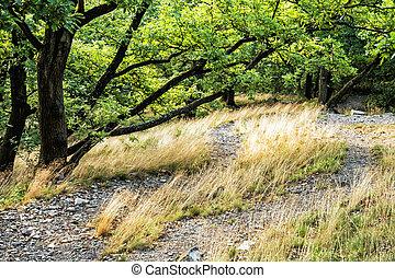 loofverliezend, bos, in, zomer, droog, gras, en, groene bomen