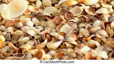 Look at cover of seashells on sea coast in macro shallow DOF...