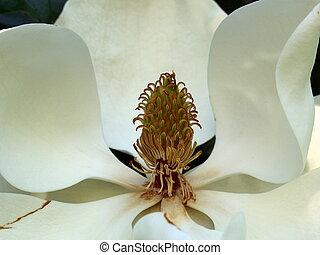Look Inside The Magnolia 2