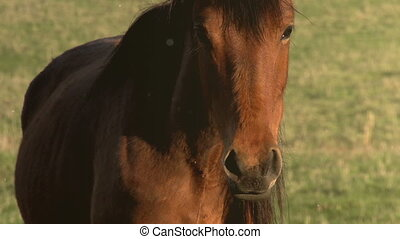 Look Mare - The horse looks curiously at the camera and...