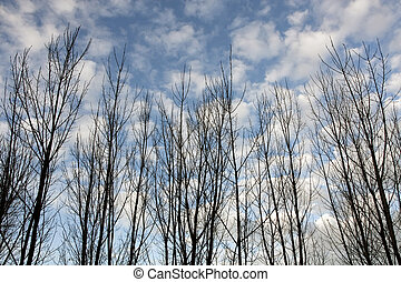 look of bare trees