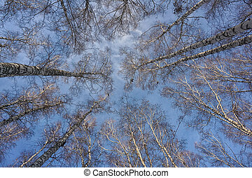 look up at the trees