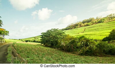 mauritian landscape with green fields - looking at beautiful...
