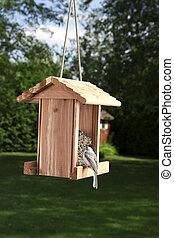 Black-capped Chickadee on a bird feeder