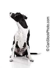 Looking back - Beautiful mixed breed dog sitting and...