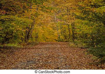 Looking Down Narrow Lane in Autumn