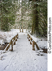 Looking Down Snow Coverd Bridge in Forest