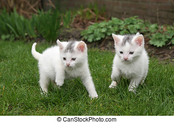 Looking for trouble - Little kittens looking for trouble