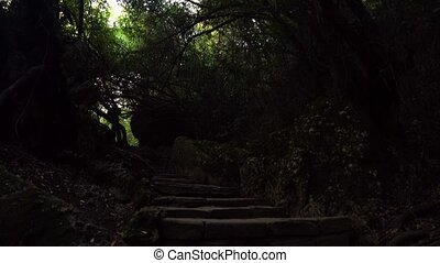 Looking on stone staircase and moving camera on trees in the...