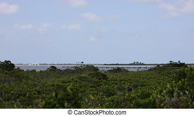 Looking over the mangroves at a dock on the water Florida...