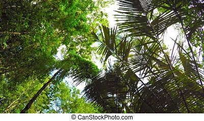 Looking Skyward through Palm Trees on a Nature Trail. FullHD video