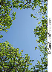 Looking through the tree canopy to the blue sky beyond