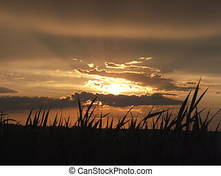 Looking up at a prairie sunset