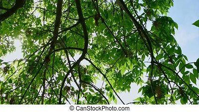 Looking up at lush foliage in sunny day turning or spinning...