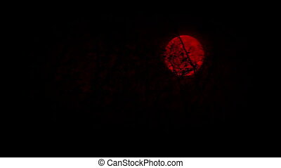 Looking Up At Red Moon In The Woods - Moving under trees...