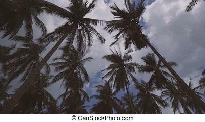 Looking up at rotating palm trees - Looking up at palm trees...