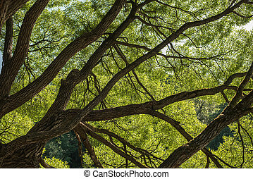 Looking up in Forest - Green Tree branches nature abstract background